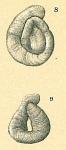 Cornuspiroides primitivus