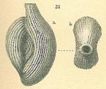 Spiroloculina antillarum