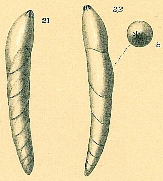 Dentalina aphelis