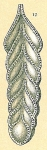 Frondicularia compta var. villosa