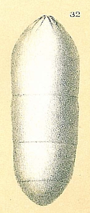 Pseudoglandulina aequalis