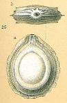 Fissurina cucullata