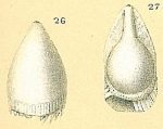 Fissurina fimbriata