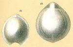 Fissurina submarginata