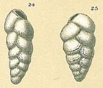 Brizalina subspinescens