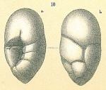 Robertinoides bradyi