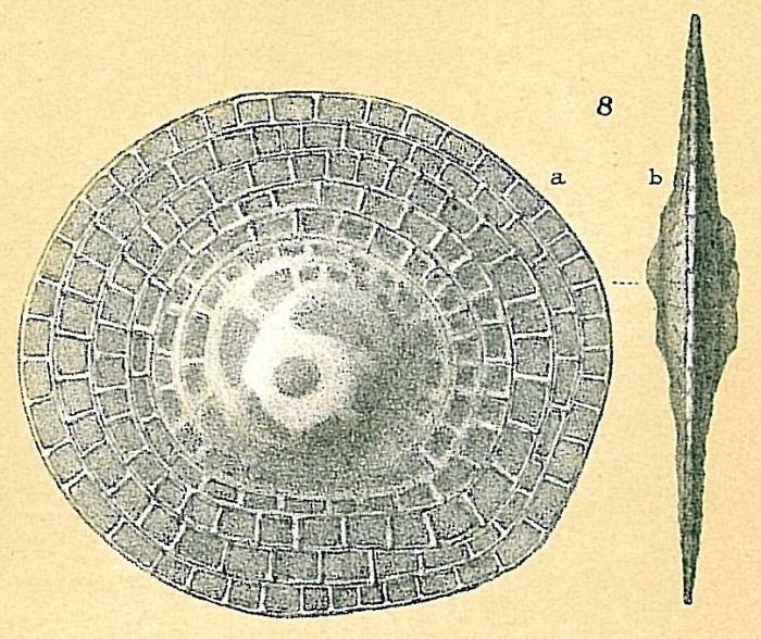 Cycloclypeus carpenteri