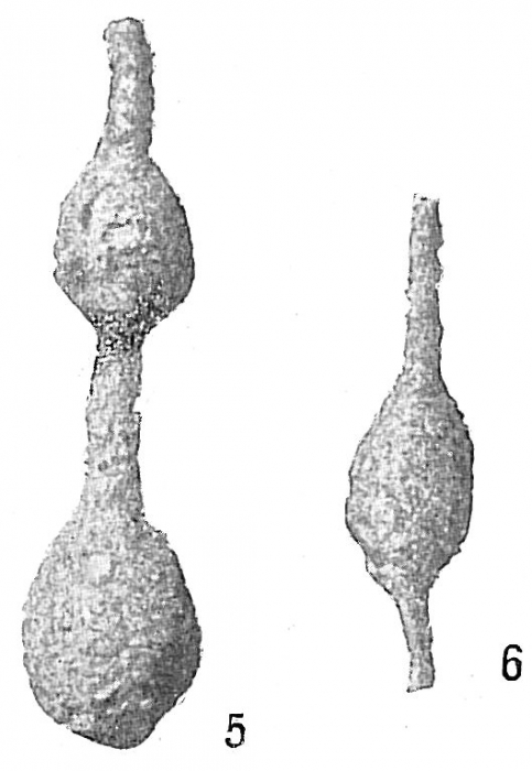 Reophax distans
