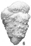 Textularia goesii