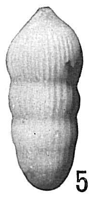 Nodosaria comatula