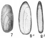 Polymorphina lactea oblonga