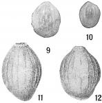 Polymorphina myristiformis