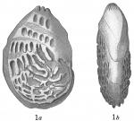 Cristellaria bradyi