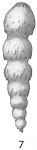 Nodosaria lepidula hispidula