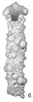 Rhizammina indivisa