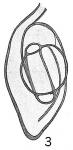 Spiroloculina grateloupi