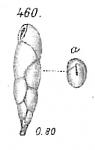 Virgulina squamosa