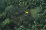 Aaptos suberitoides ZMA Por. 14468