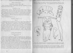 Noetiphilus elongatus description