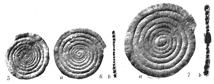 Ammodiscus tenuis