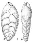 Bolivina vadescens
