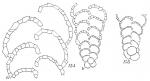 Textularia tenuissima