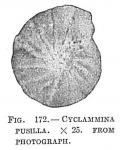 Cyclammina pusilla