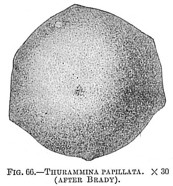Thurammina papillata