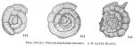 Trochamminoides proteus (inaccurate)