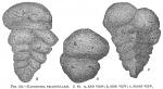 Gaudryina triangularis