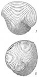Orbiculina adunca