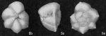 Globorotalia (Turborotalia) fijiana