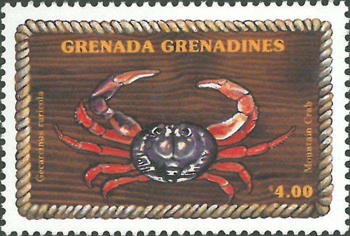 Gecarcinus ruricola