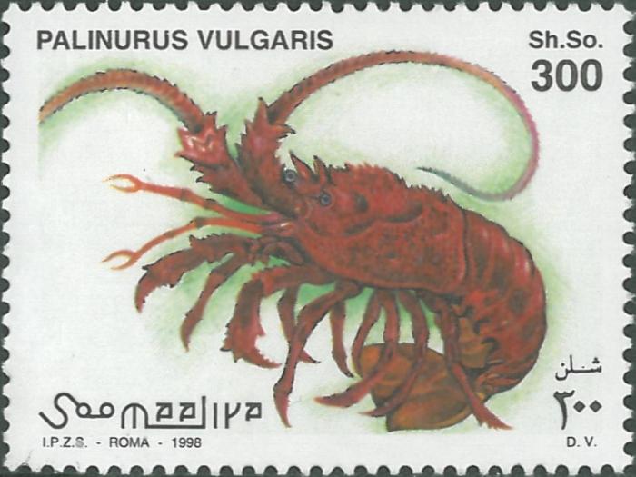 Palinurus vulgaris