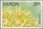 Alveopora allingi