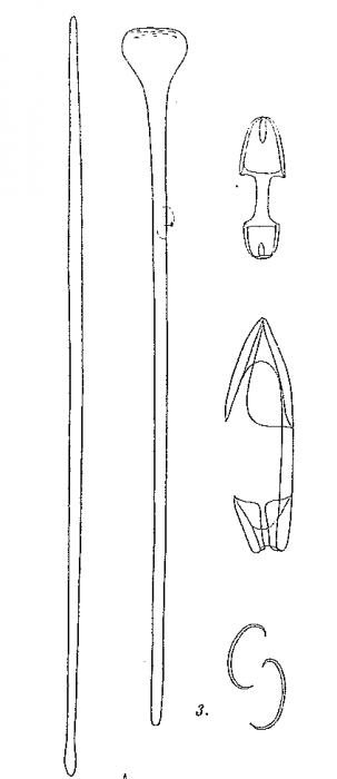Rhaphidotheca arctica Hentschel, 1929