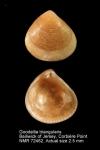 Goodallia triangularis