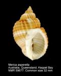 Merica asperella