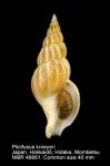 Plicifusus kroeyeri