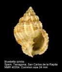 Bivetiella similis