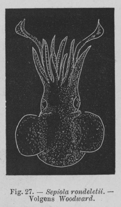 Eben (1884, figuur 27)