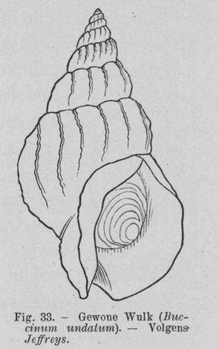 Eben (1884, figuur 33)