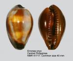 Erronea onyx