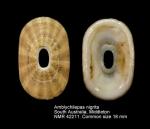 Amblychilepas nigrita