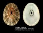 Fissurella nubecula