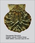 Flexopecten flexuosus