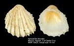 Trigoniocardia granifera
