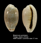 Blasicrura summersi