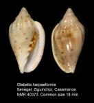 Glabella harpaeformis