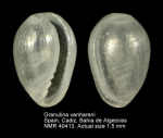 Granulina vanhareni